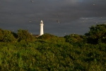 lighthouse and colony-6444